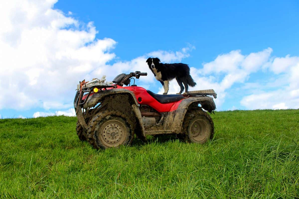 The quad bike safety puzzle