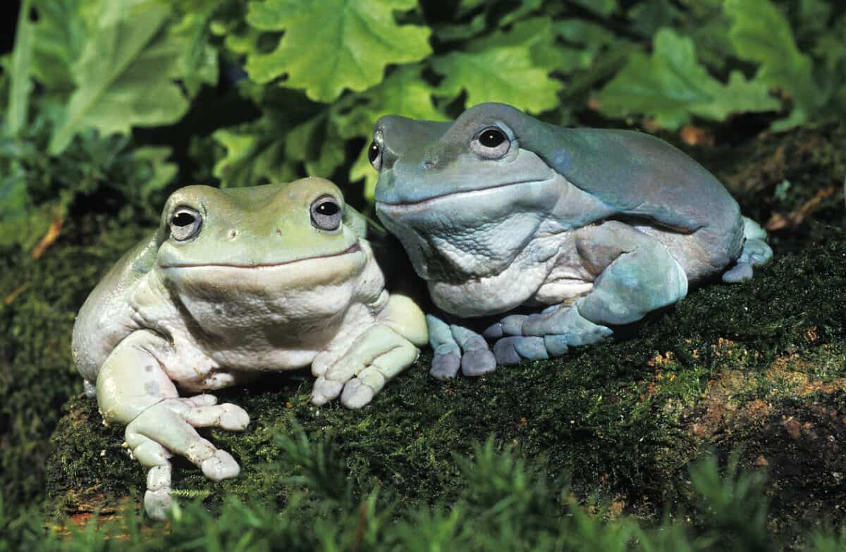 Frogging the National OHS Strategy