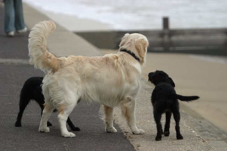Does the tail wag the dog or vice versa?
